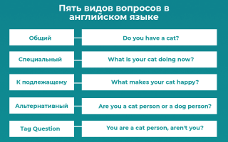 Вопросы в английском языке — виды английских вопросов | как строятся вопросы в английском языке